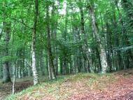 Le faggete vetuste della Foresta Umbra diventano Patrimonio Naturale dell'Umanità
