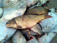 Pesca di frodo a Taranto